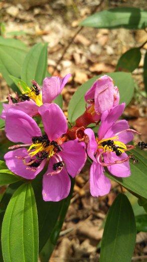 Ketahanan Pakan Lebah Melalui Rekayasa Vegetasi