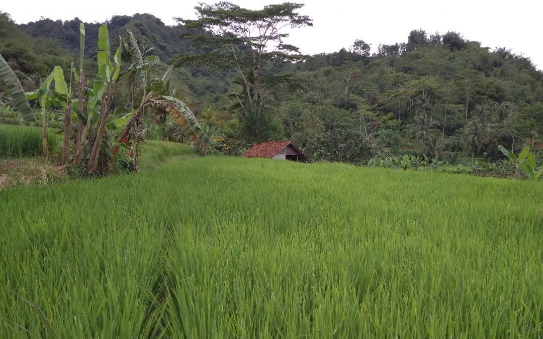 Demplot Budidaya Trigona untuk Masyarakat Desa